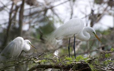 An Oasis for Birds at Shangri La Gardens in Orange, Texas