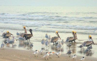 Birds of St. Joe Island