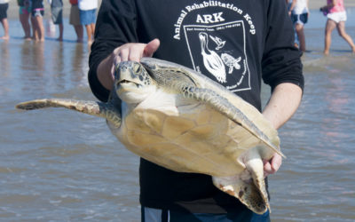 Turtles Released Back to the Wild