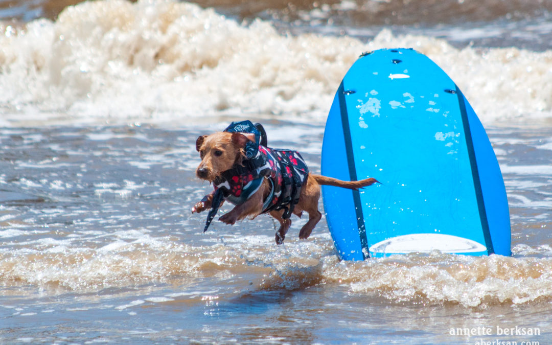Dogs Hang Twenty in Port A Surfing Contest